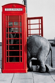 Elephant phonebox poster